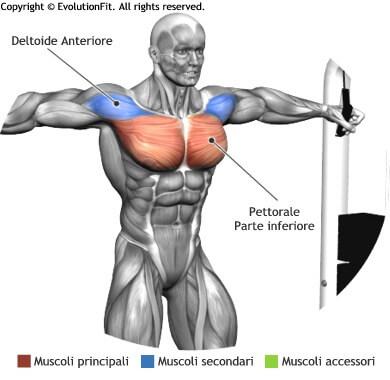 mappa muscolare pettorali chiusure cavi alti