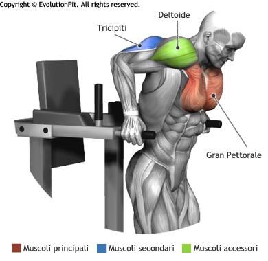mappa muscolare pettorali piegamenti parallele