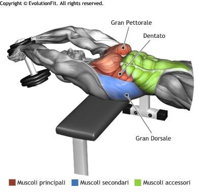 mappa muscolare pettorali pullover manubrio