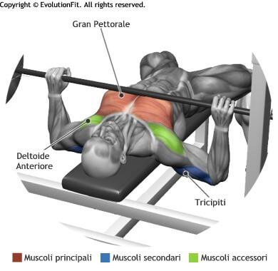 mappa muscolare pettorali spinte bilanciere piana