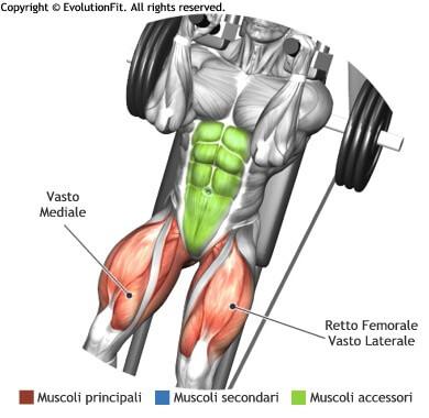 mappa muscolare quadricipiti hack squat
