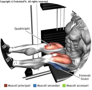 mappa muscolare quadricipiti pressa orizzontale