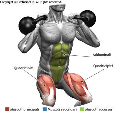 mappa muscolare quadricipiti squat 2 kettlebell
