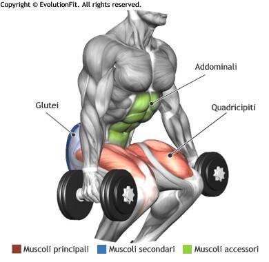 mappa muscolare quadricipiti squat 2 manubri