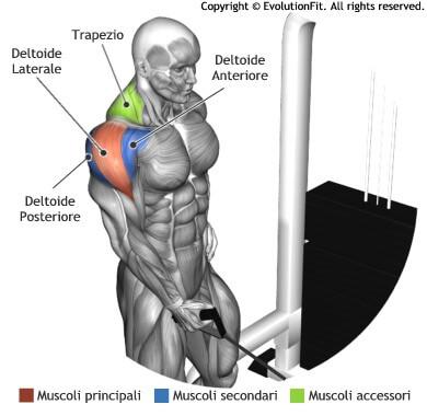 mappa muscolare spalle alzate laterali cavo singolo