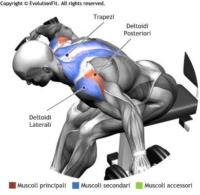 mappa muscolare spalle alzate laterali seduto busto 90