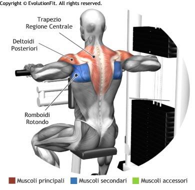 mappa muscolare spalle trazioni upper back