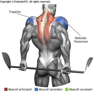 mappa muscolare trapezi shrugs bilanciere dietro in piedi