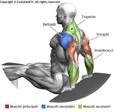 mappa muscolare tricipiti dips tra panche