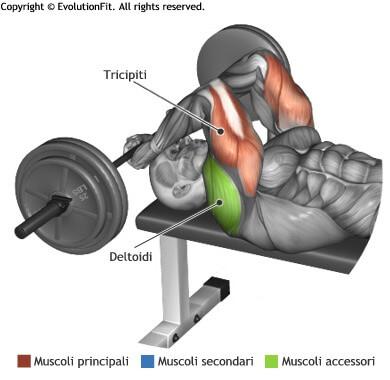 mappa muscolare tricipiti french press bilanciere panca piana