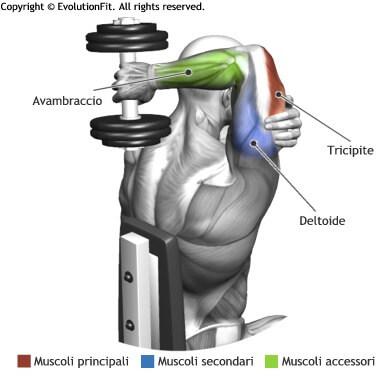 mappa muscolare tricipiti french press seduto manubrio
