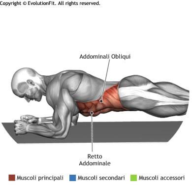 mappa muscolare addominali plank