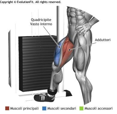mappa muscolare adduttori slanci interni gamba in piedi ai cavi