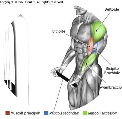 mappa muscolare bicipiti curl cavo basso