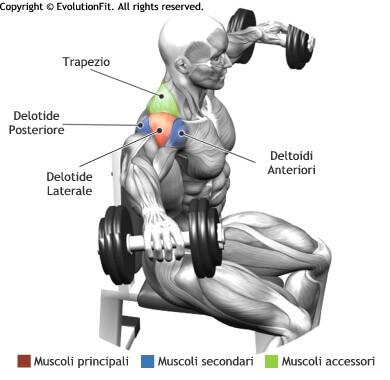 mappa muscolare deltoidi alzate laterali manubri seduto