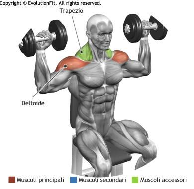 mappa muscolare deltoidi arnold press