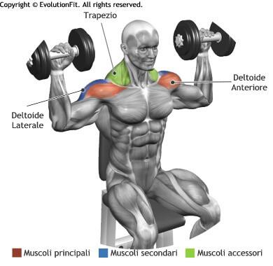 mappa muscolare deltoidi spinte manubri seduto