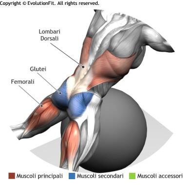 muscoli allenati hyperextension stability ball
