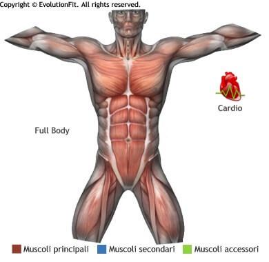 mappa muscolare cardio burpees