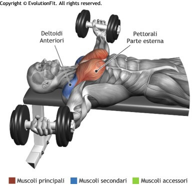 mappa muscolare pettorali aperture panca piana