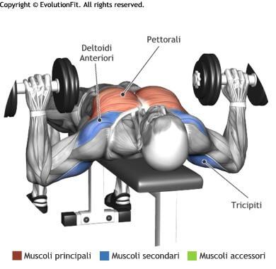 mappa muscolare spinte pancapiana 2 manubri