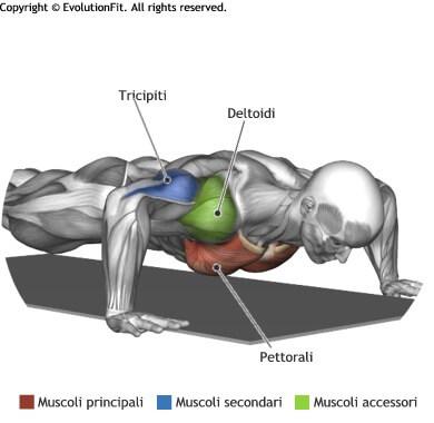 mappa muscolare pettorali flessioni a terra