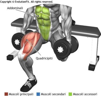 mappa muscolare quadricipiti squat bulgaro manubri