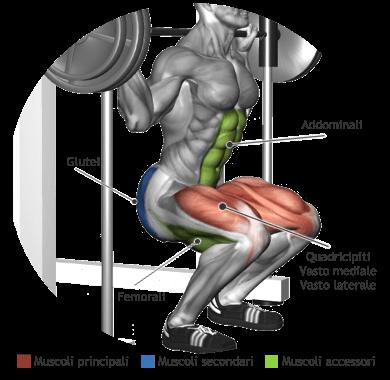 mappa muscolare quadricipiti squat multipower