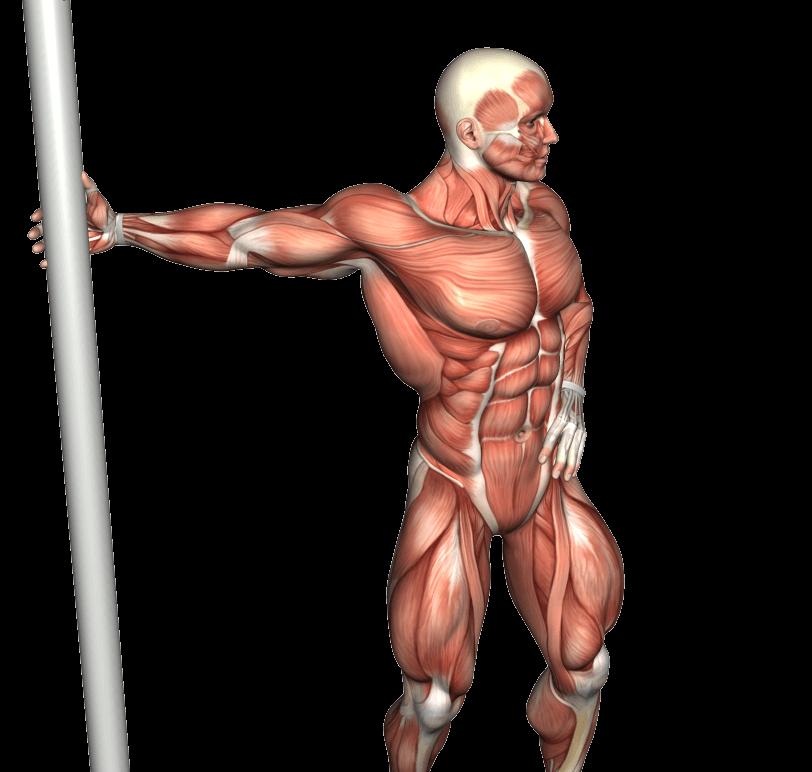 mappa muscolare rotazione del tronco con braccio in estensione