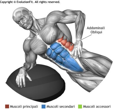 mappa muscolare side plank su bosu