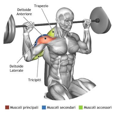 mappa muscolare spalle lento dietro seduto bilanciere