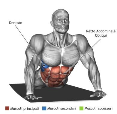 mappa muscolare stretching allungamento addominali sdraiato prono a terra