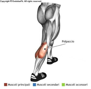 mappa muscolare stretching allungamento polpacci in piedi in appoggio