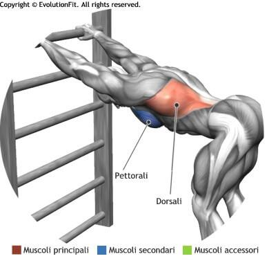 mappa muscolare stretching flessione del corpo in appoggio