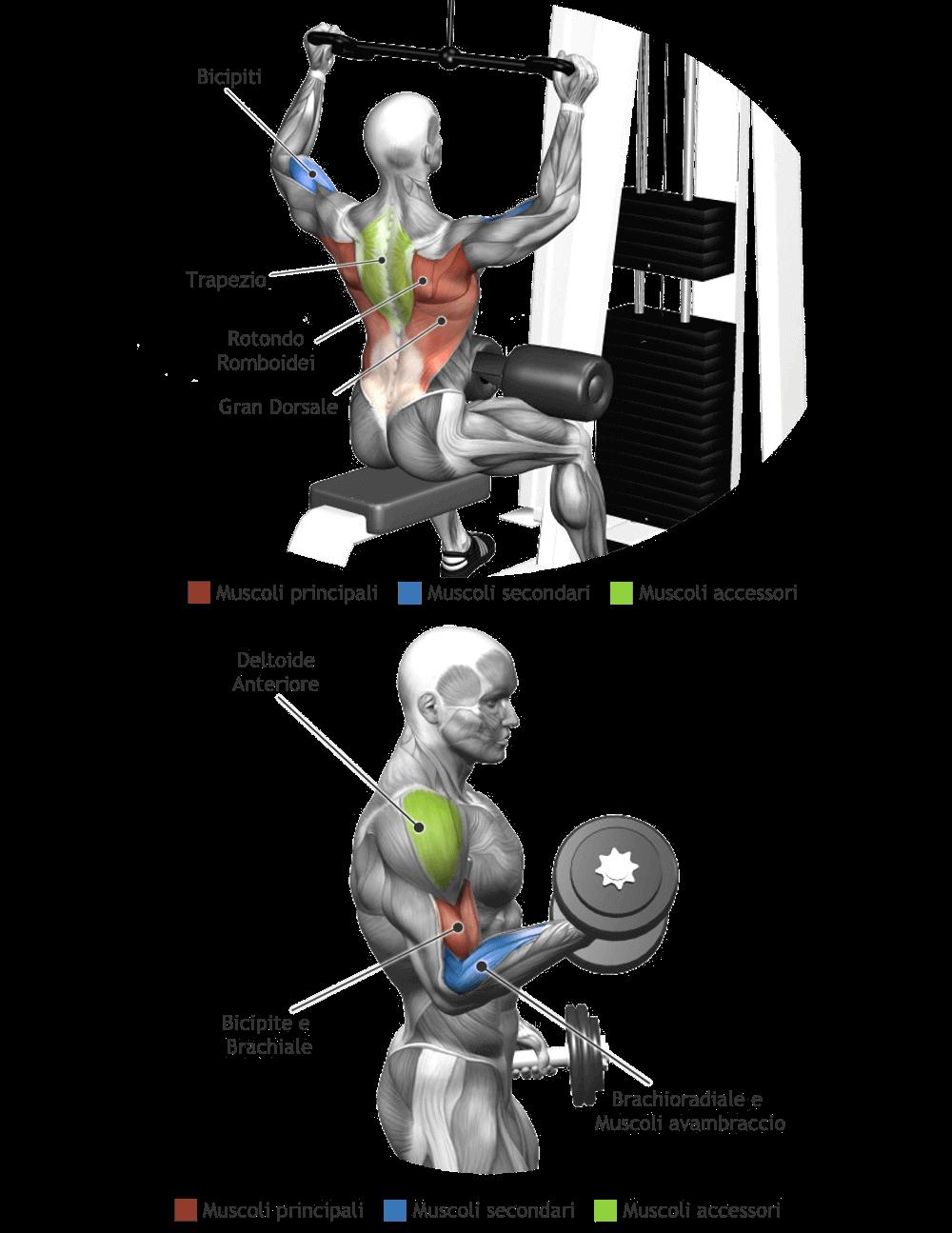 mappe muscoli allenati esercizi