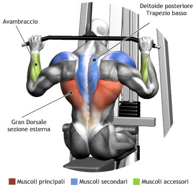 mappa muscolare lat machine dietro