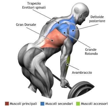 mappa muscolare rematore bilanciere
