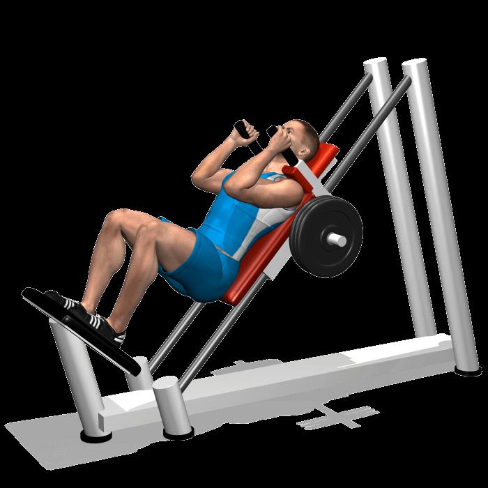 allenamento quadricipiti hack squat inizio