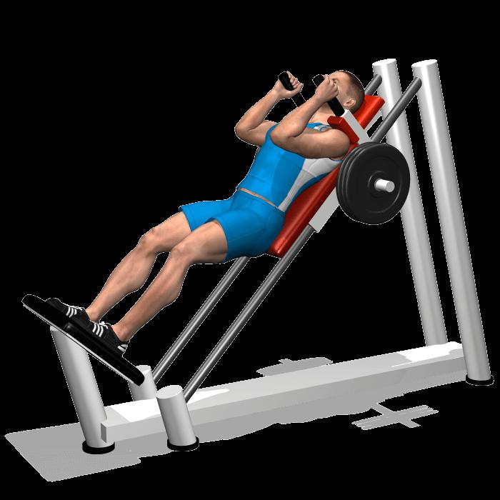 allenamento quadricipiti hack squat fine