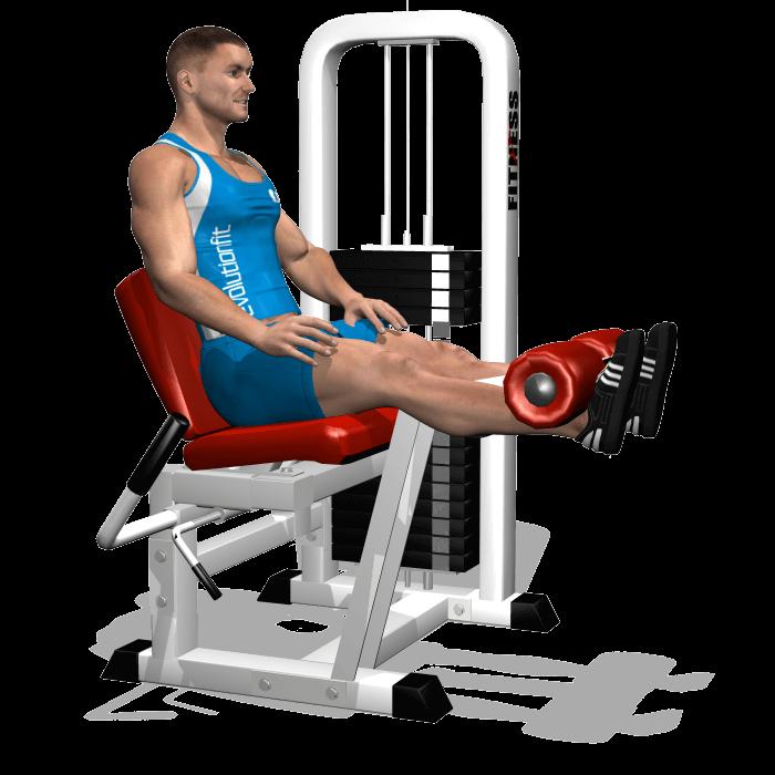 allenamento quadricipiti leg extension fine