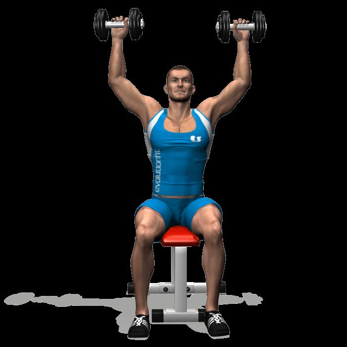 allenamento spalle spinte seduto manubri fine