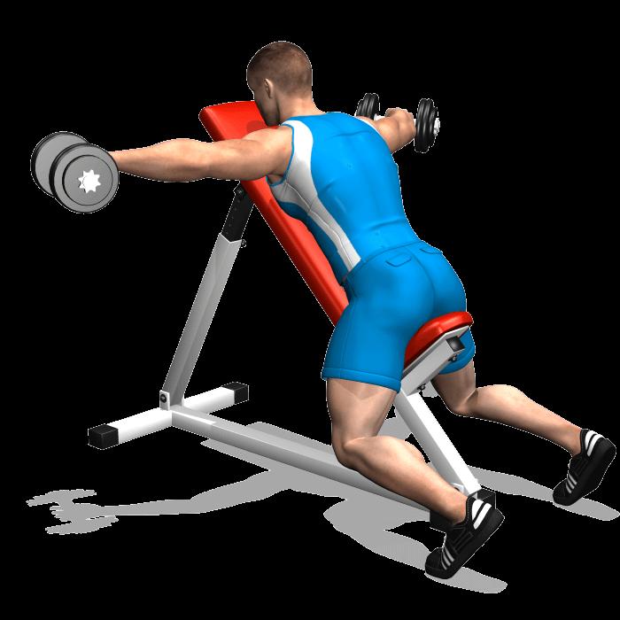allenamento spalle volare inverso manubri panca alta fine