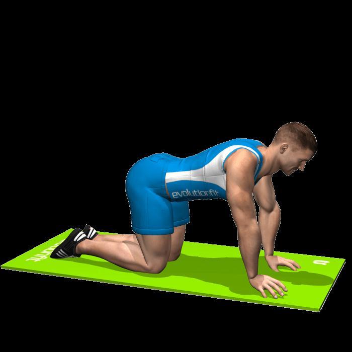 allenamento stretching posizione del gatto inizio