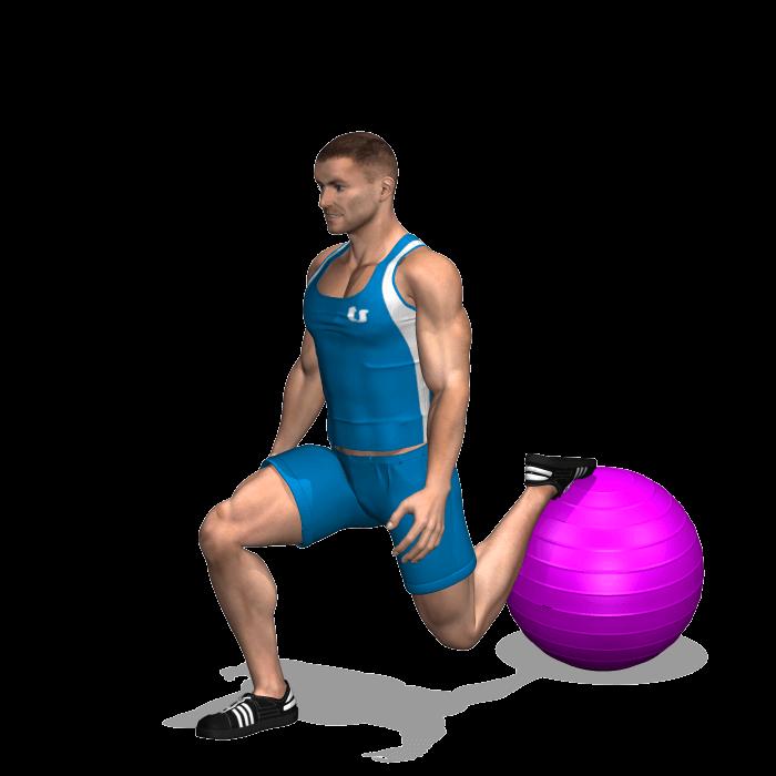 allenamento quadricipiti squat bulgaro fitball fine