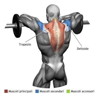 mappa muscolare trapezi tirate al mento bilanciere