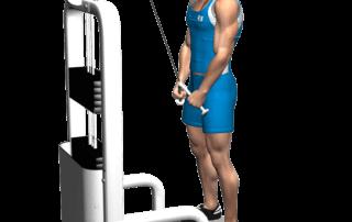 allenamento tricipiti push cavi 2 mani, fine